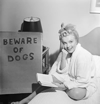 Beware of Dogs Marilyn photo